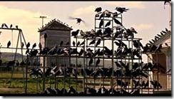 the birds cornwell