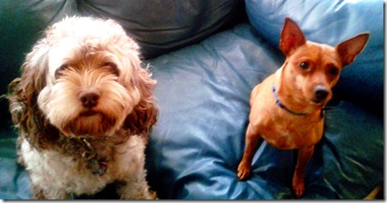 wierd dogs